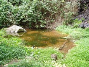 Barranco Ruiz - Charco de Agua