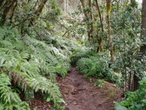 Recorrido sendero de la Ensillada por el Pijaral