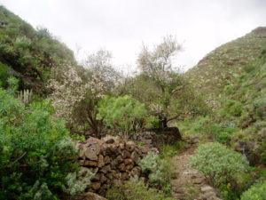 Barranco Valle Luis - Sendero por el cauce