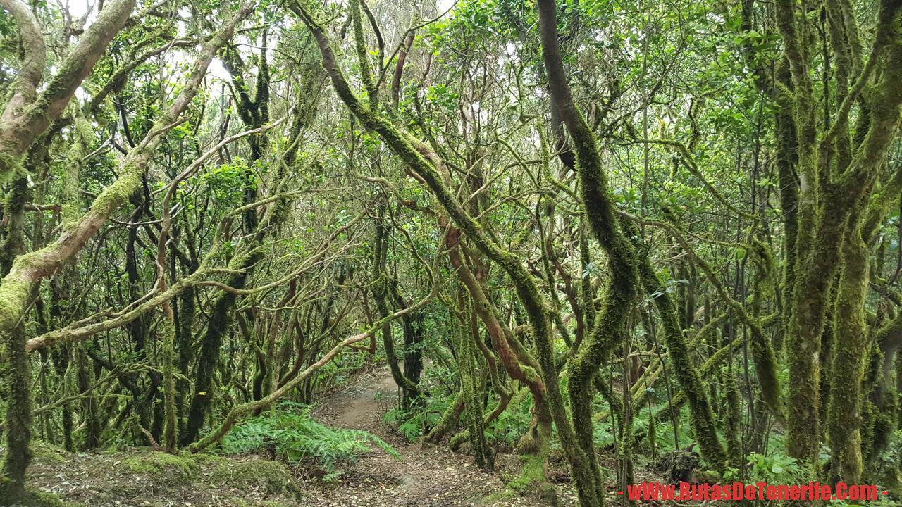 Muestra de Monteverde (El Pijaral)