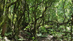 Monteverde y Musgo en el Pijaral