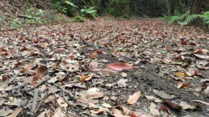 Vista desde el suelo de la pista forestal que parte del Mirador de Cabeza del Tejo