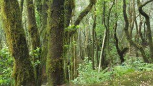 Bosque verde en el Pijaral
