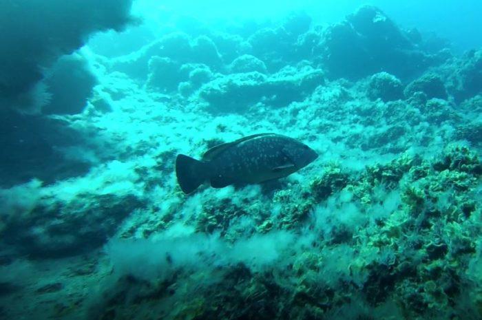 Inmersiones en el Hierro – El Salto y Tacorón (Buceo)